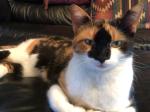 The Calico Cat Cunningham